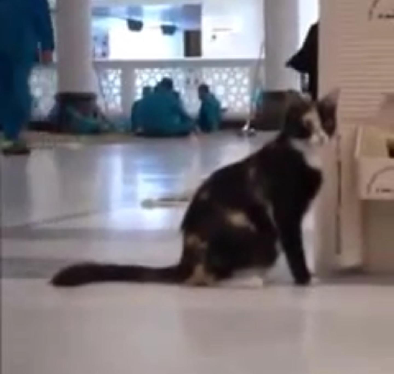 فيديو ? رائع لعامل يسقي قطة من ماء زمزم
