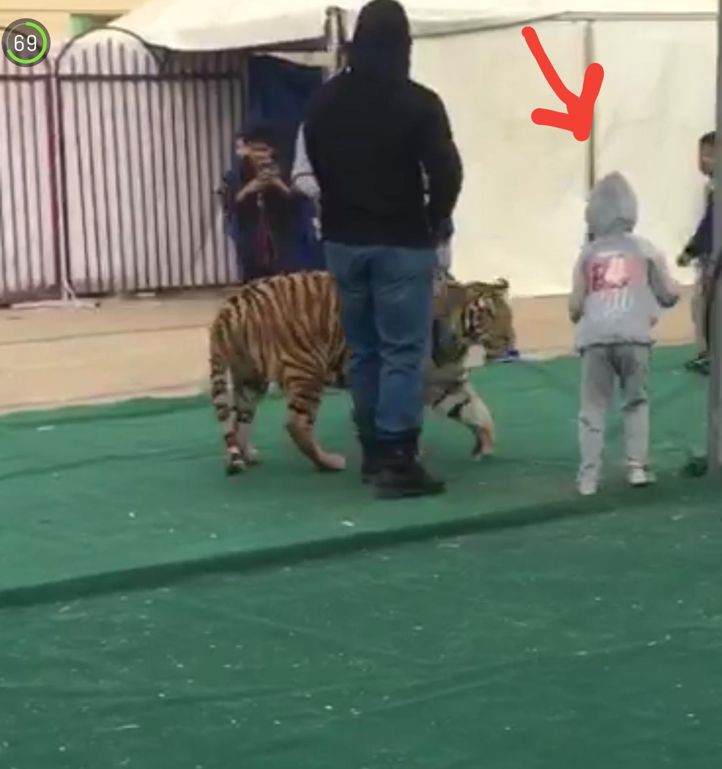 شاهد نمر يهاجم طفلة بمعرض الصناعات بسكاكا