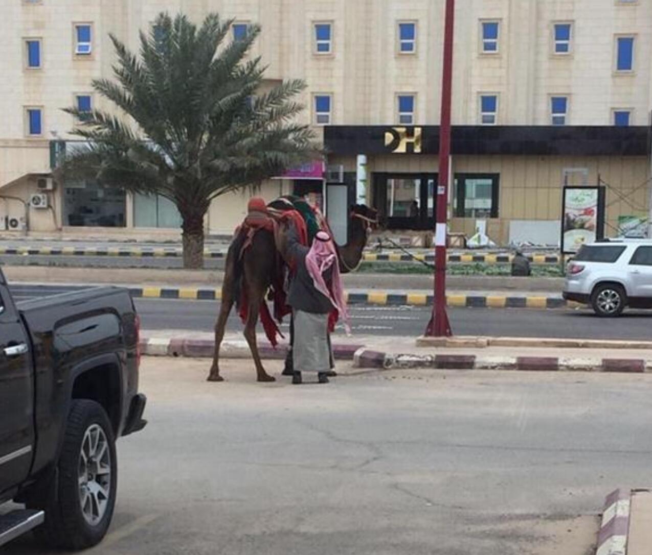 بالصور .. مواطن يراجع البنك برفقة بعيره.. ويربطه في المواقف