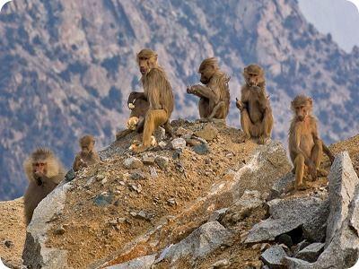 إعلان القرود يثير الغضب ضد شركة سياحة ويدفعها للاعتذار
