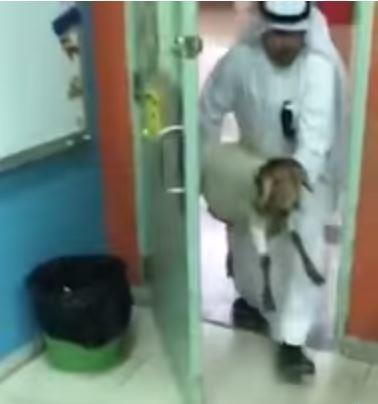 شاهد.. معلم يفاجئ طلابه ويحضر لهم خروفاً صغيراً بالفصل.. لهذا السبب