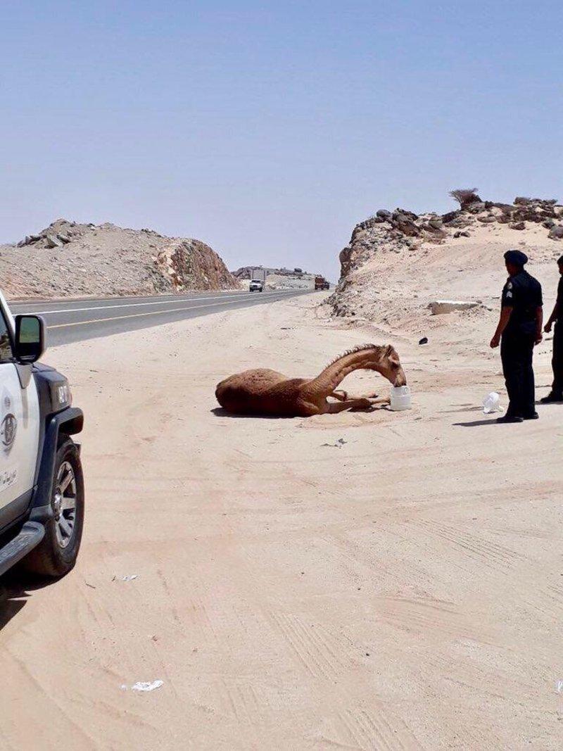 صورة لرجلَيْ أمن ببيشة تنال إعجاب المغردين