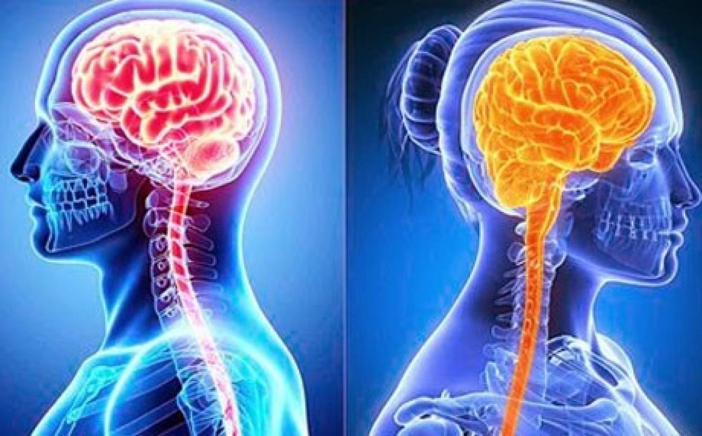 «دراسة»: دماغ المرأة أكثر نشاطاً من الرجل