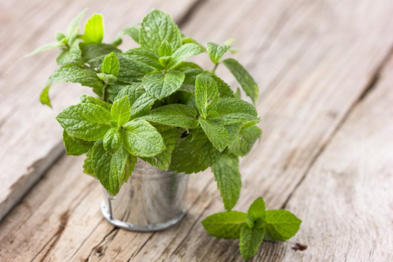 9 فوائد طبية مذهلة لـ«النعناع».. تعرَّف عليها