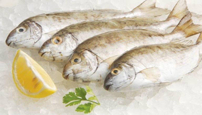 دراسة حديثة: الأسماك الدهنية تحسن وظائف الدماغ لدى الأطفال