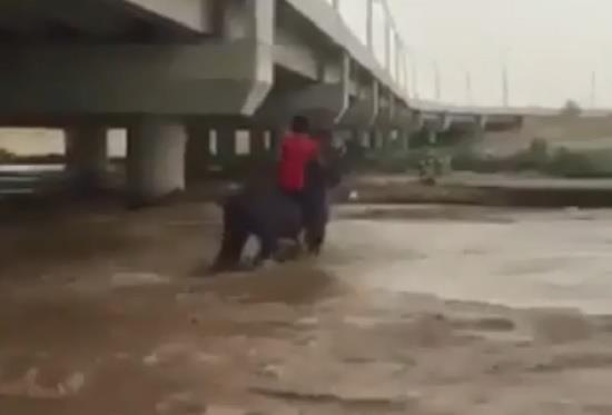 شاب مغامر يقتحم بحصانه سيل وادي نجران.. شاهد ما حصل له