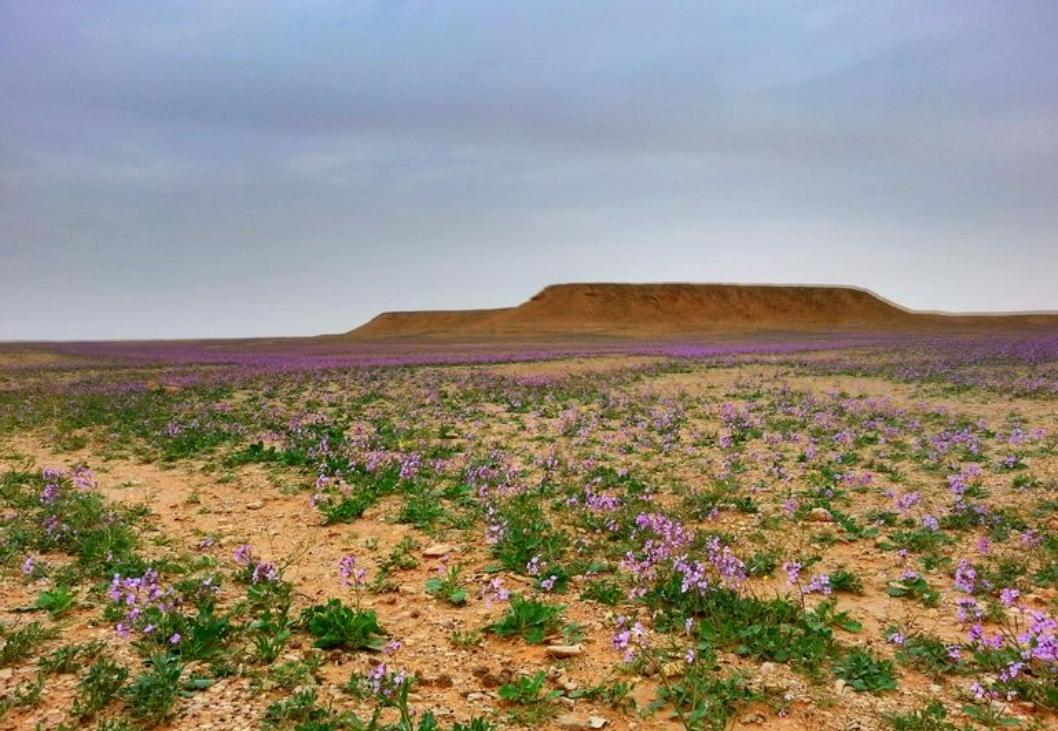 هذه الصور لجميع انواع العشب اذا جاء الربيع