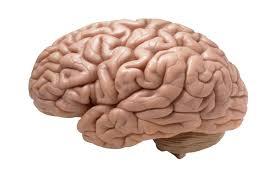 دراسة تحذر: مخ الإنسان يتآكل مع زيادة وزن الجسم