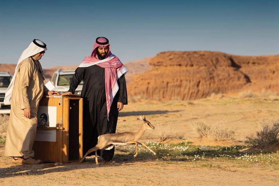 """بالصور.. الأمير محمد بن سلمان يدشن """"محمية شرعان الطبيعية"""" في العلا"""