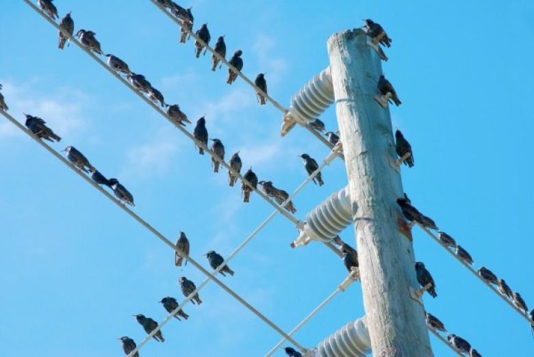 لماذا لا تتعرض الطيور للصعق كهربائيا عند وقوفها على أسلاك الضغط العالي؟.. شركة الكهرباء تجيب