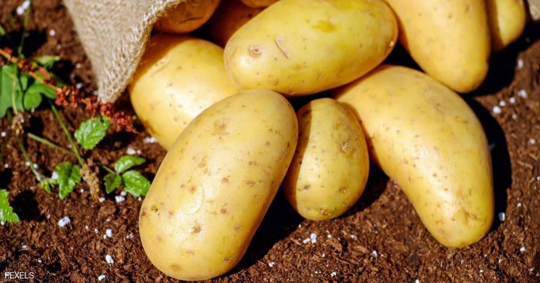 البطاطس قد تختفي من أسواق بريطانيا بسبب الأحوال الجوية