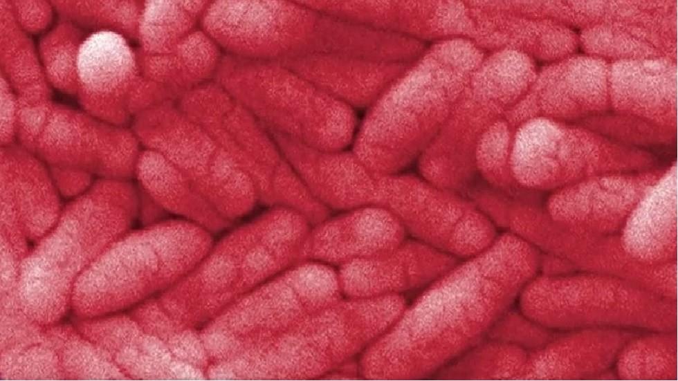 علماء: السالمونيلا تتحول إلى بكتيريا مقاومة للمضادات الحيوية
