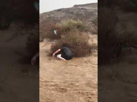 فيديو.. طفل يخاطر بحياته لإنقاذ جِرَاء من السيول الجارفة