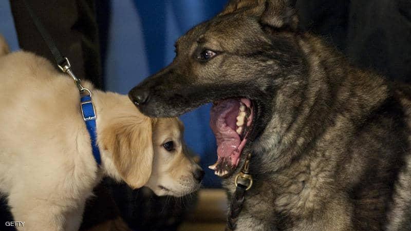 خبراء ينصحون: كيف تتجنب عضات الكلاب؟