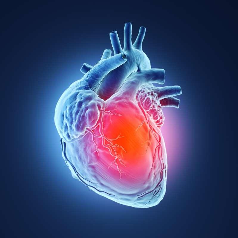 لماذا لا يُصاب القلب بالسرطان؟