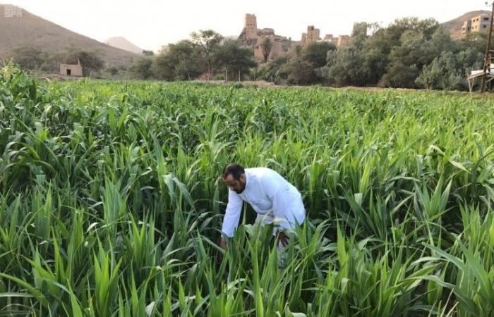 رابط بوابة ريف لدعم المزارعين