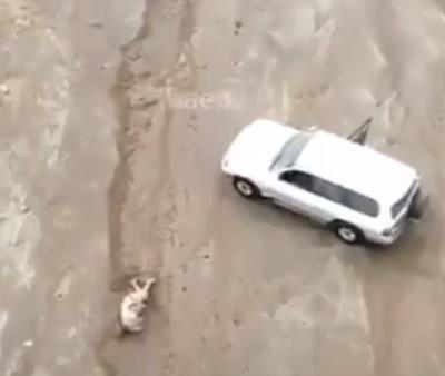شاهد.. لحظة إنقاذ شخص جرفته السيول وحاصرته شمال ينبع