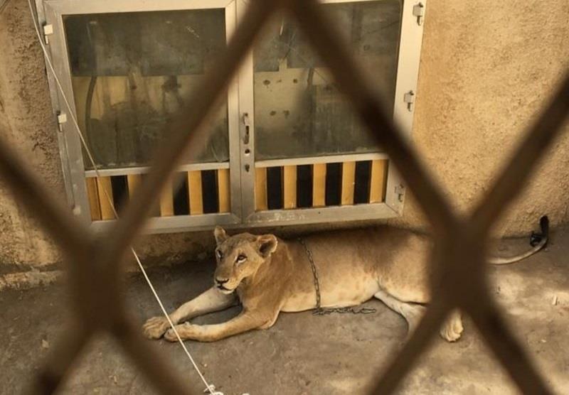 بعد بلاغ السكان بسماع صوت زئير.. الجهات الأمنية تباشر منزلاً مهجوراً في مكة !